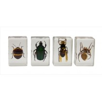 CELESTRON 3D BUG SPECIMENT KIT # 2